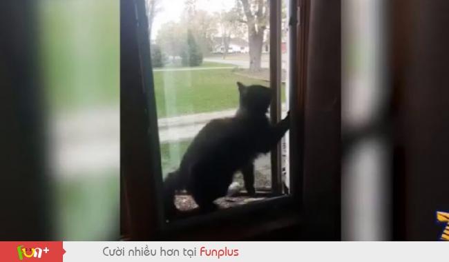 Những chú mèo tồi tệ