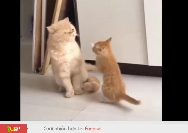 Cười lăn lộn với những tình huống hài hước của mèo nhà