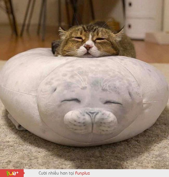 Ảnh Mèo Ngộ Nghĩnh