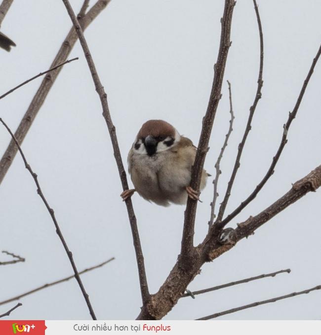 Siêu nhân chim